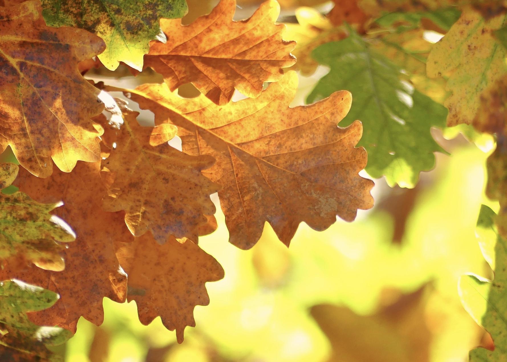 healing 1 fall start - cross river, NY