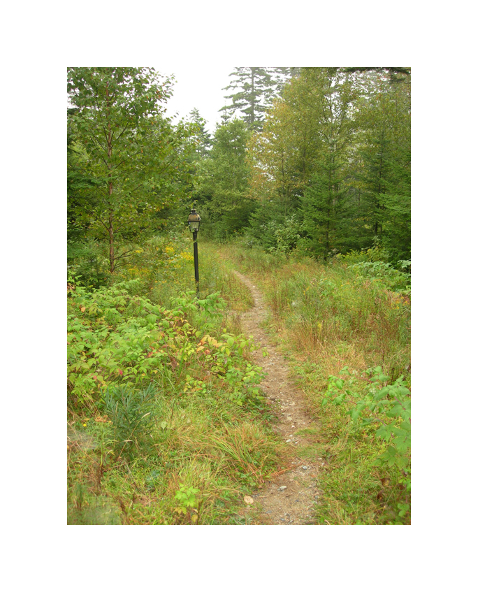 Pathway in the Woods_Lightpost_LR.jpg