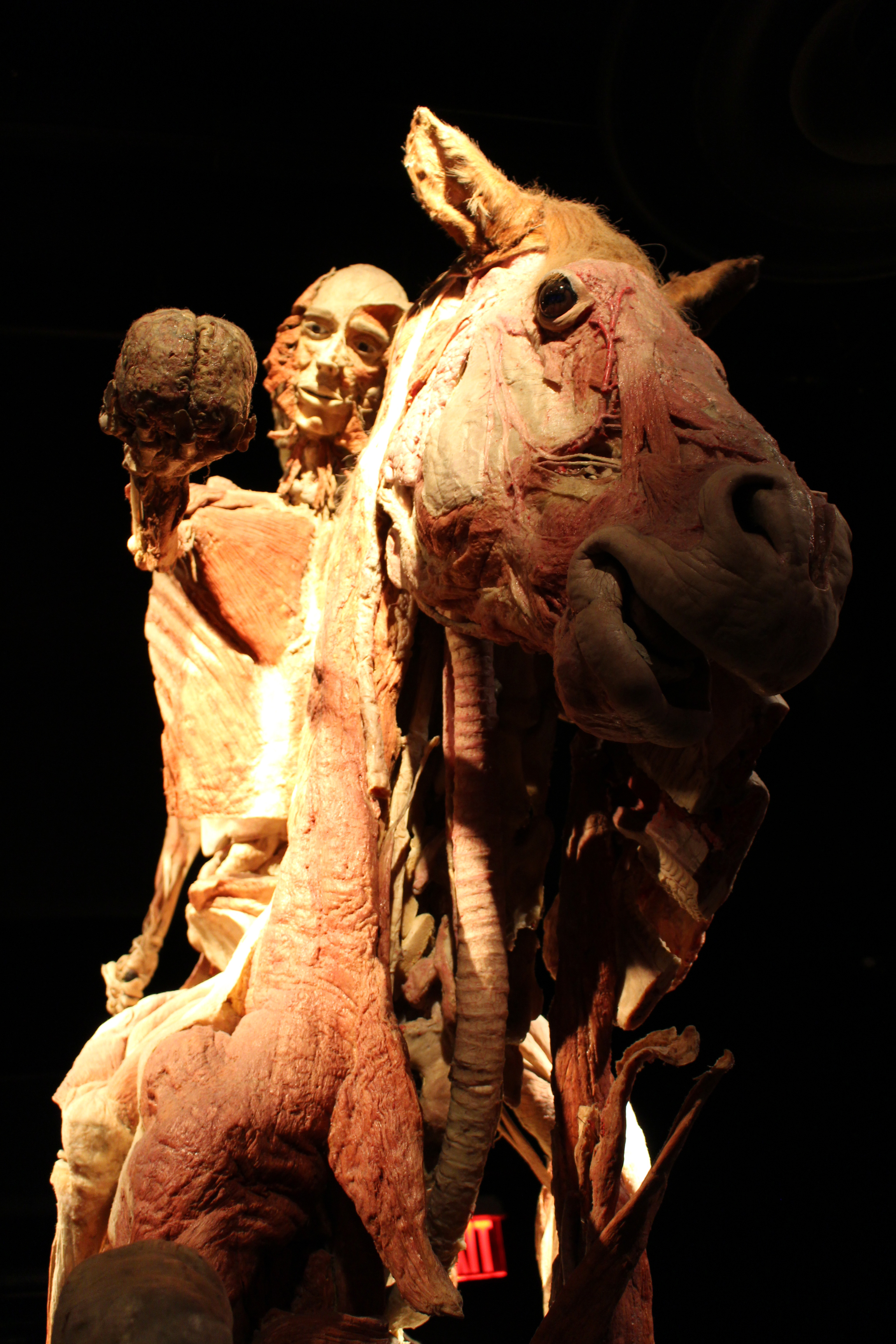 Body Worlds_Horse_Aug2015.jpg