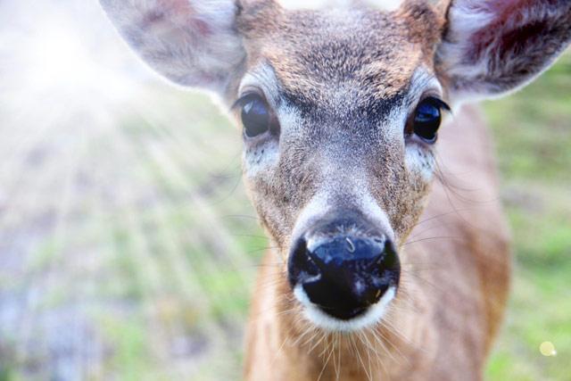 key-deer.jpg