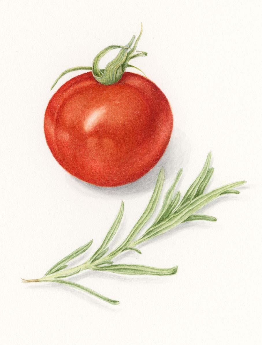 Tomato & Rosemary | Original Sold