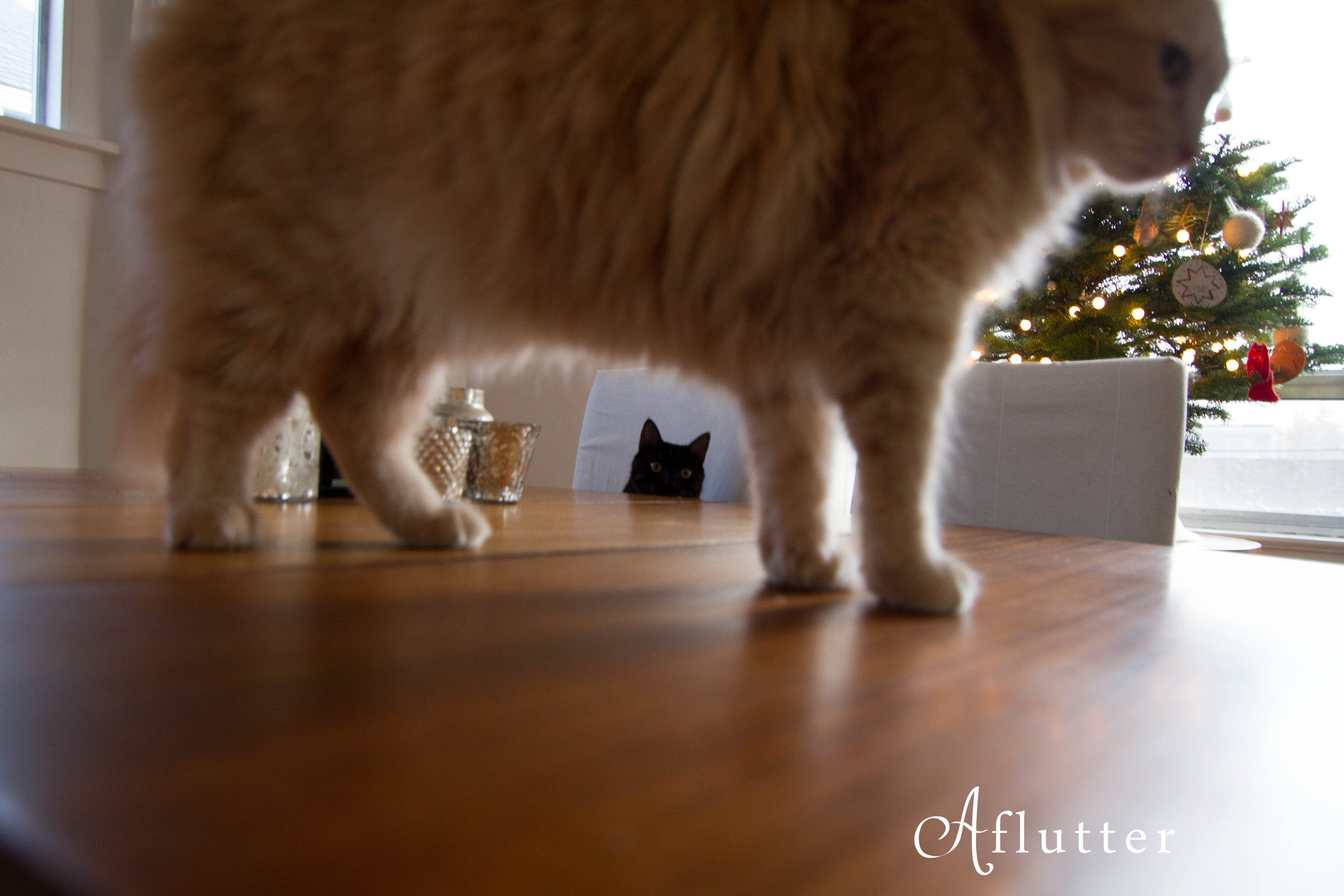 Christmas-kitties-1-of-1.jpg