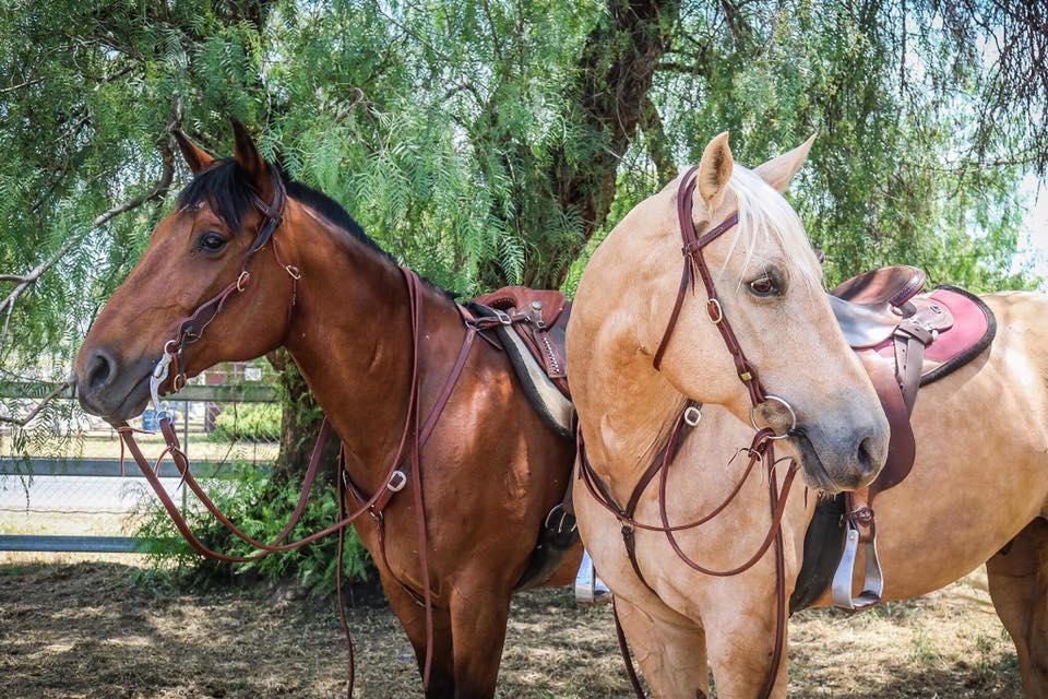 horse models.jpg