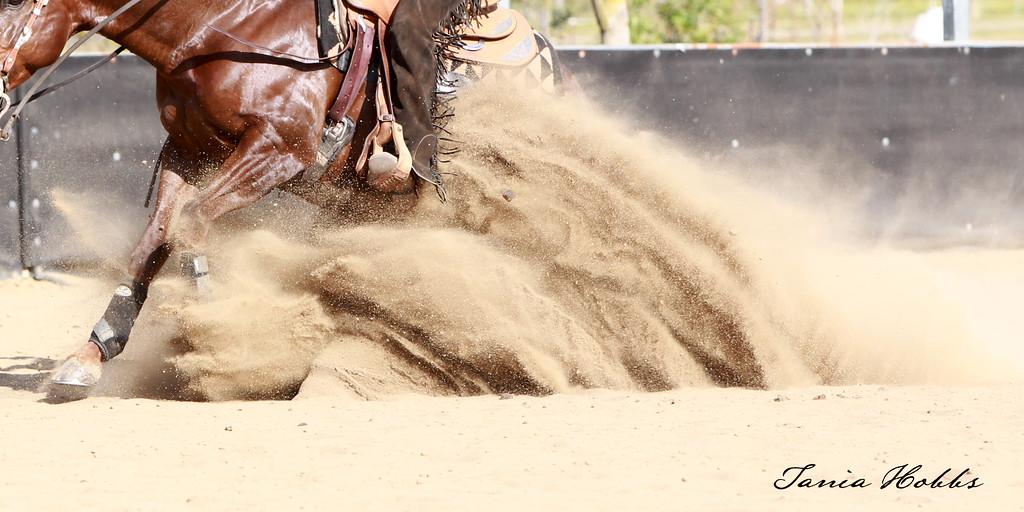 horse sliding.jpg