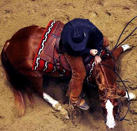 cutting horse above angle.jpg