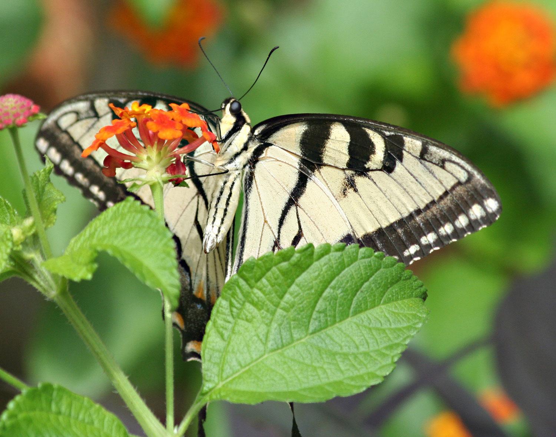 Butterfly and Verbena photograph by Samantha Henneke | Bulldog Pottery | Seagrove | North Carolina