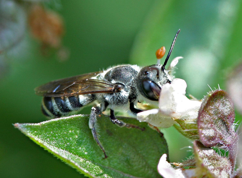 Bee and Penstemon photograph by Samantha Henneke | Bulldog Pottery | Seagrove | North Carolina