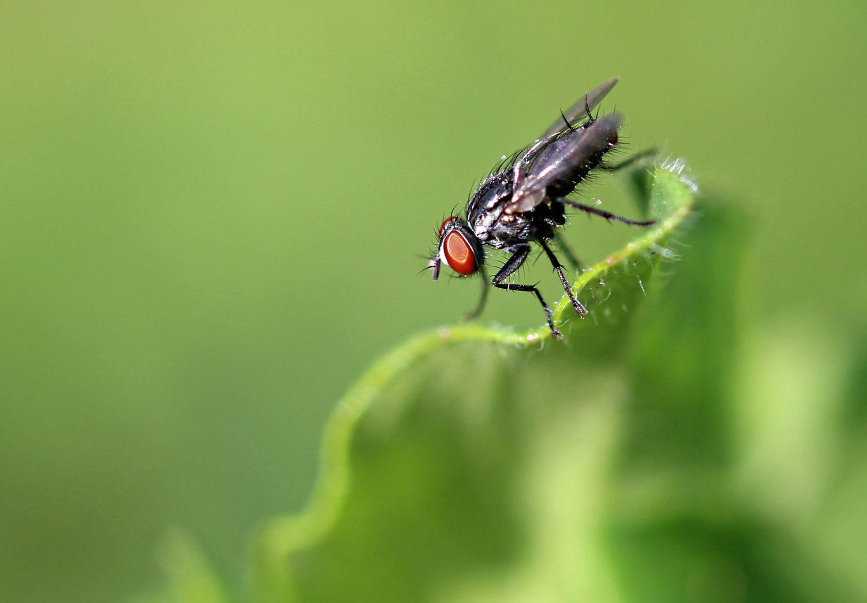 Red-Eye Fly photograph by Samantha Henneke | Bulldog Pottery | Seagrove | North Carolin