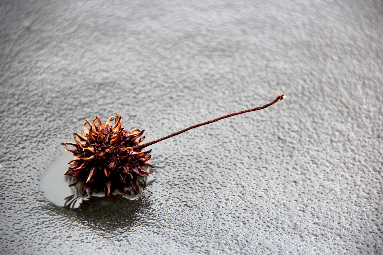 Frozen Pond photograph by Samantha Henneke | Bulldog Pottery | Seagrove | North Carolina