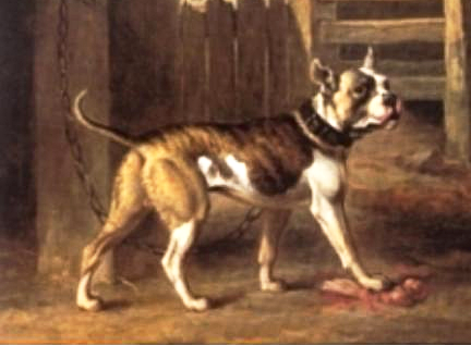 painting of an Original Bulldog
