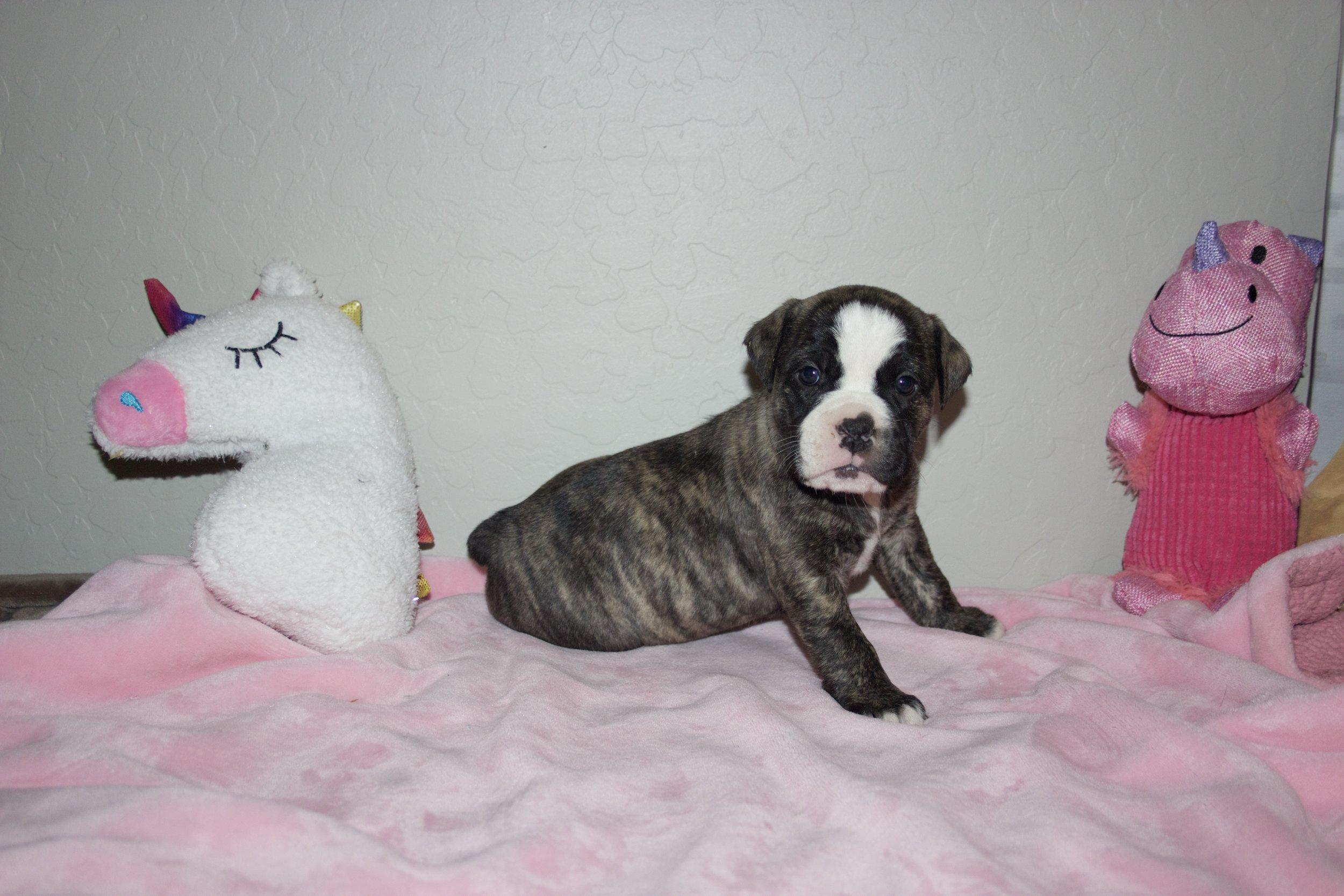 Adopted, residing in San Tan Valley, AZ