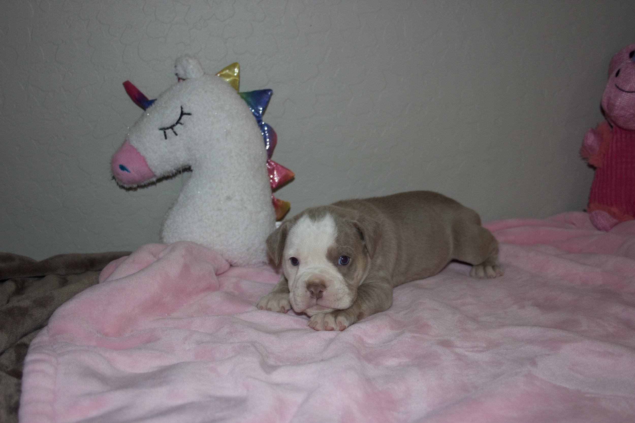 Adopted, Residing in San Tan Valley, AZ.