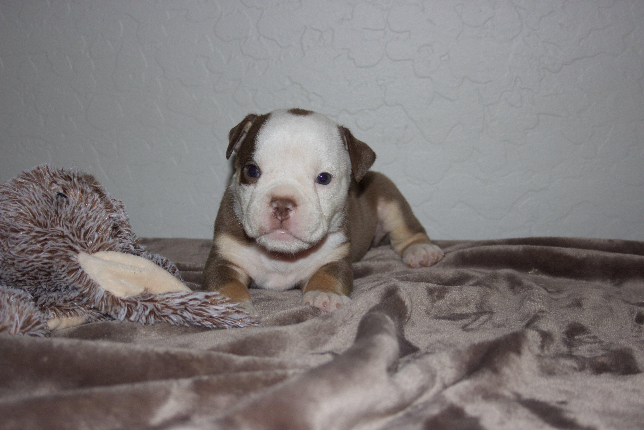 Adopted- Residing in San Tan Valley, AZ