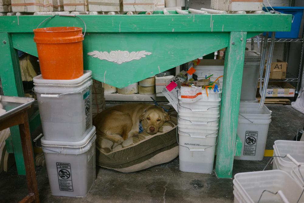 Studio pup, Bernadette, on her throne.