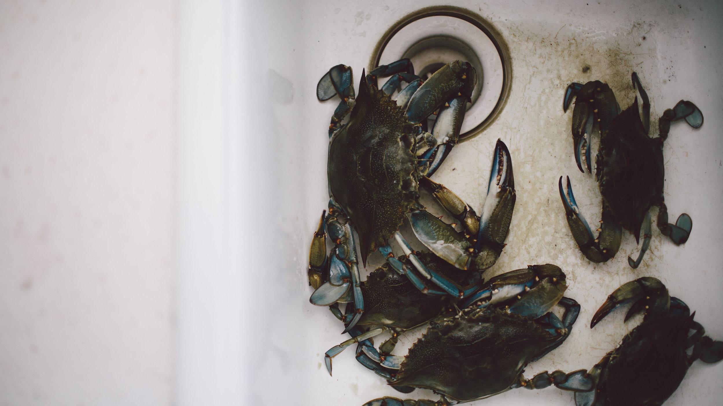 CrabTrap_Day2-14.jpg