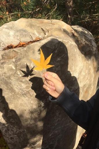 shadow of leaf.jpg