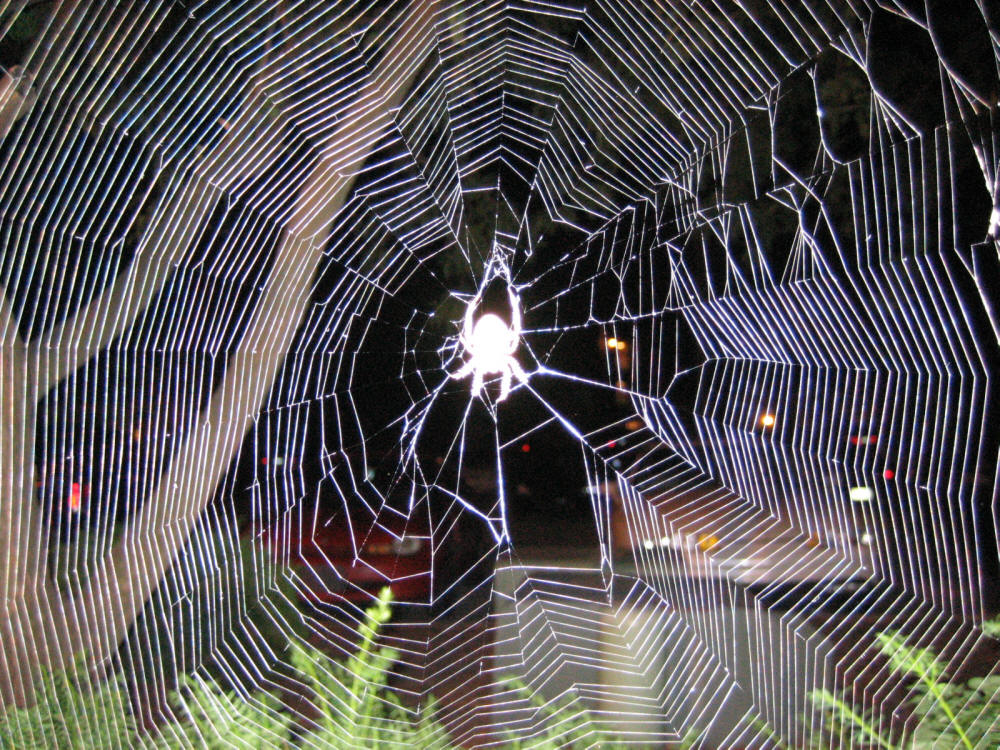 Without realizing it, we get caught, - stuck to a screen like a bug might get tangled in Spider's web.We are as good as dead.