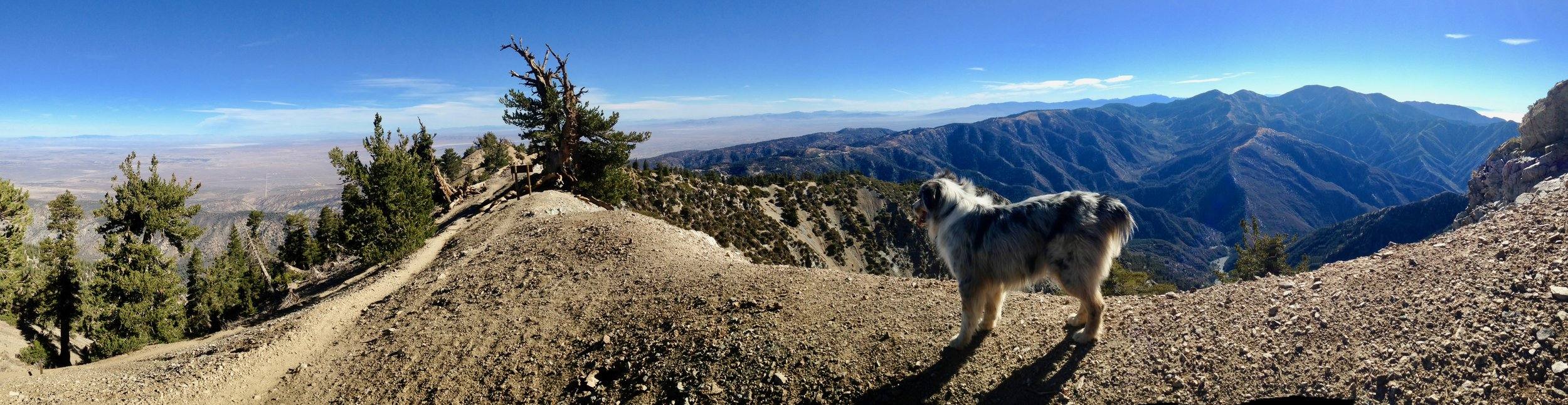 Mount Baden-Powell - Angels National Forest, CA