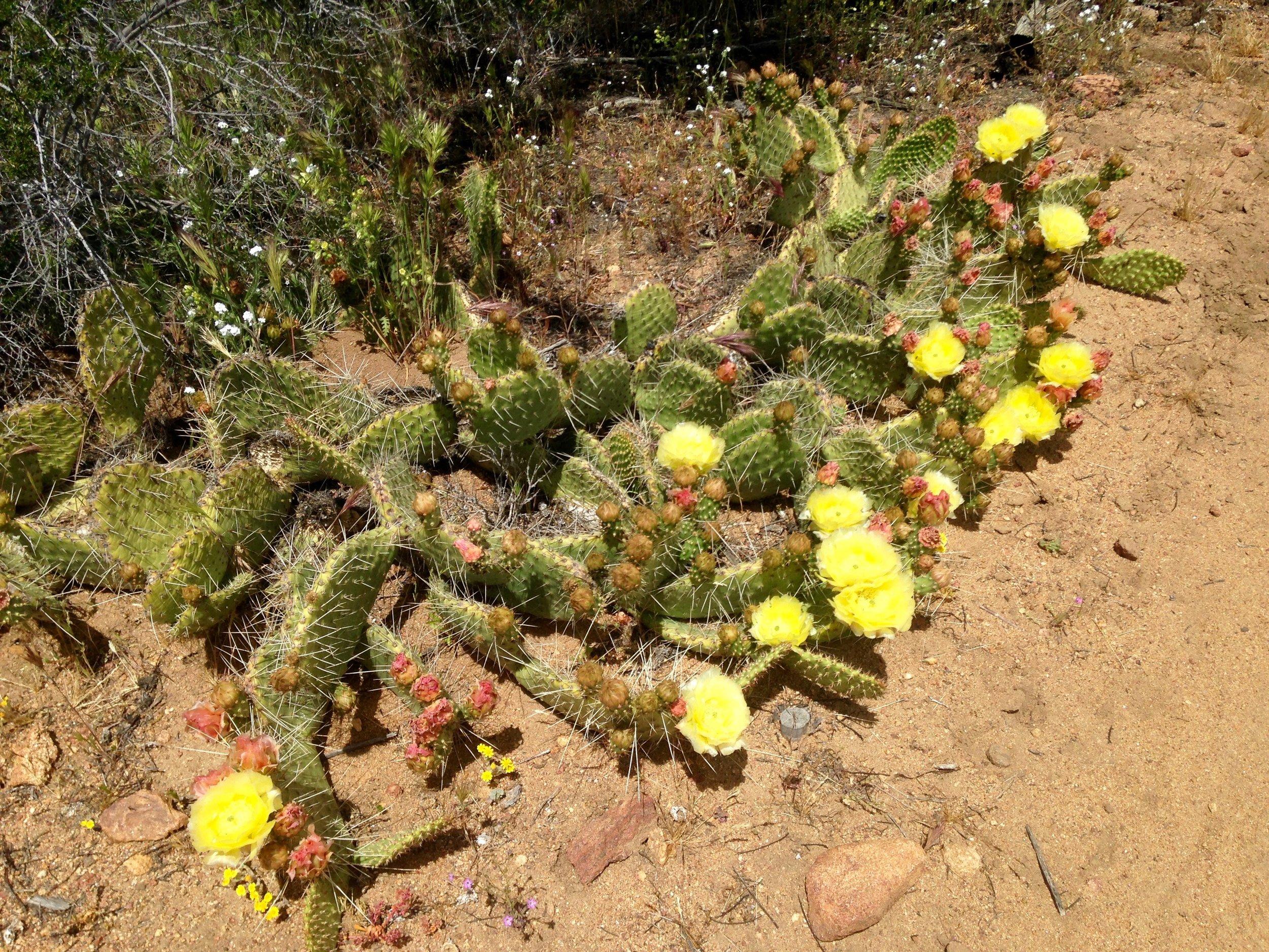 Anza-Borrengo Desert State Park, CA