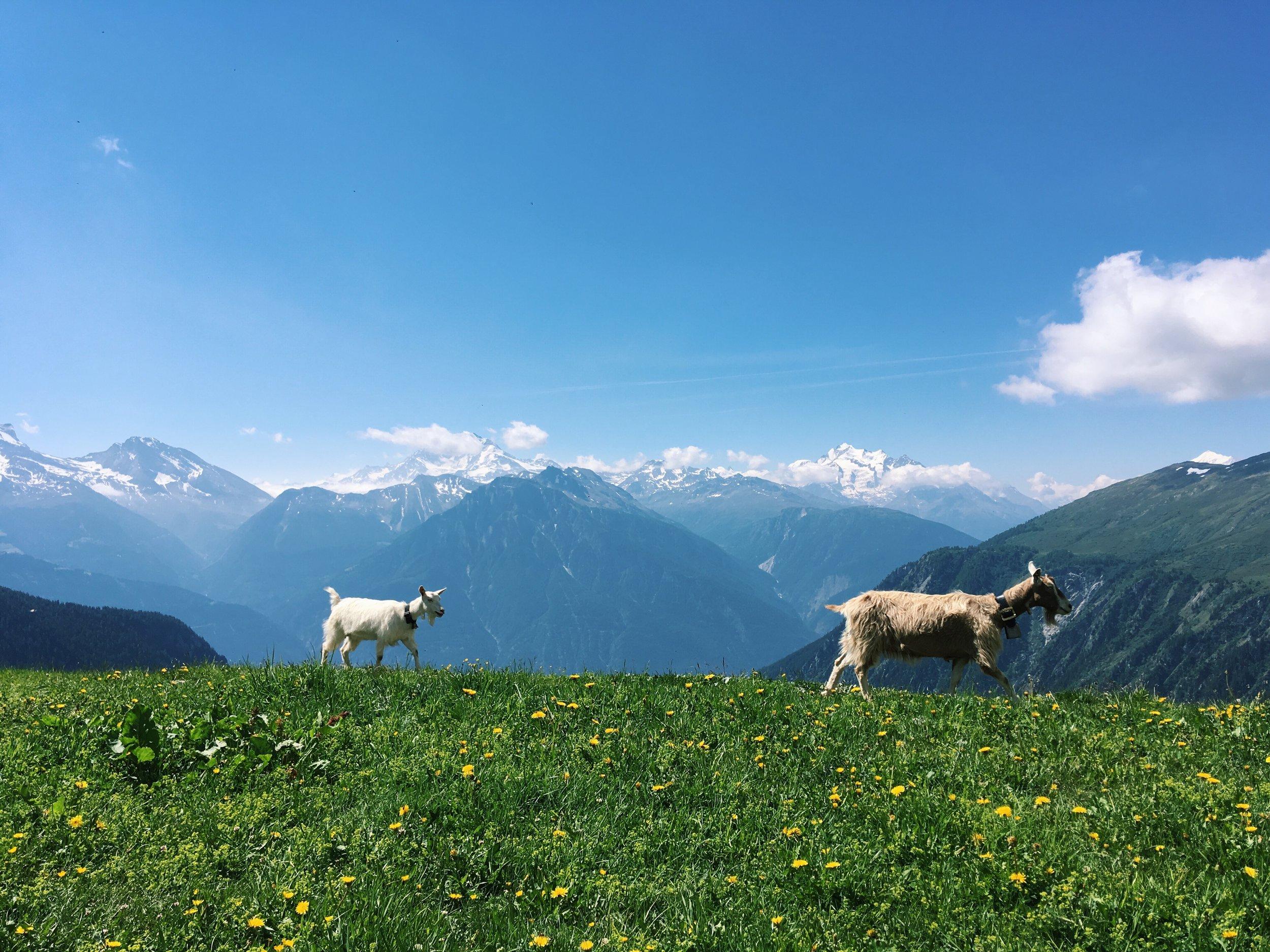 Aletsch Glacier- Naters, Switzerland
