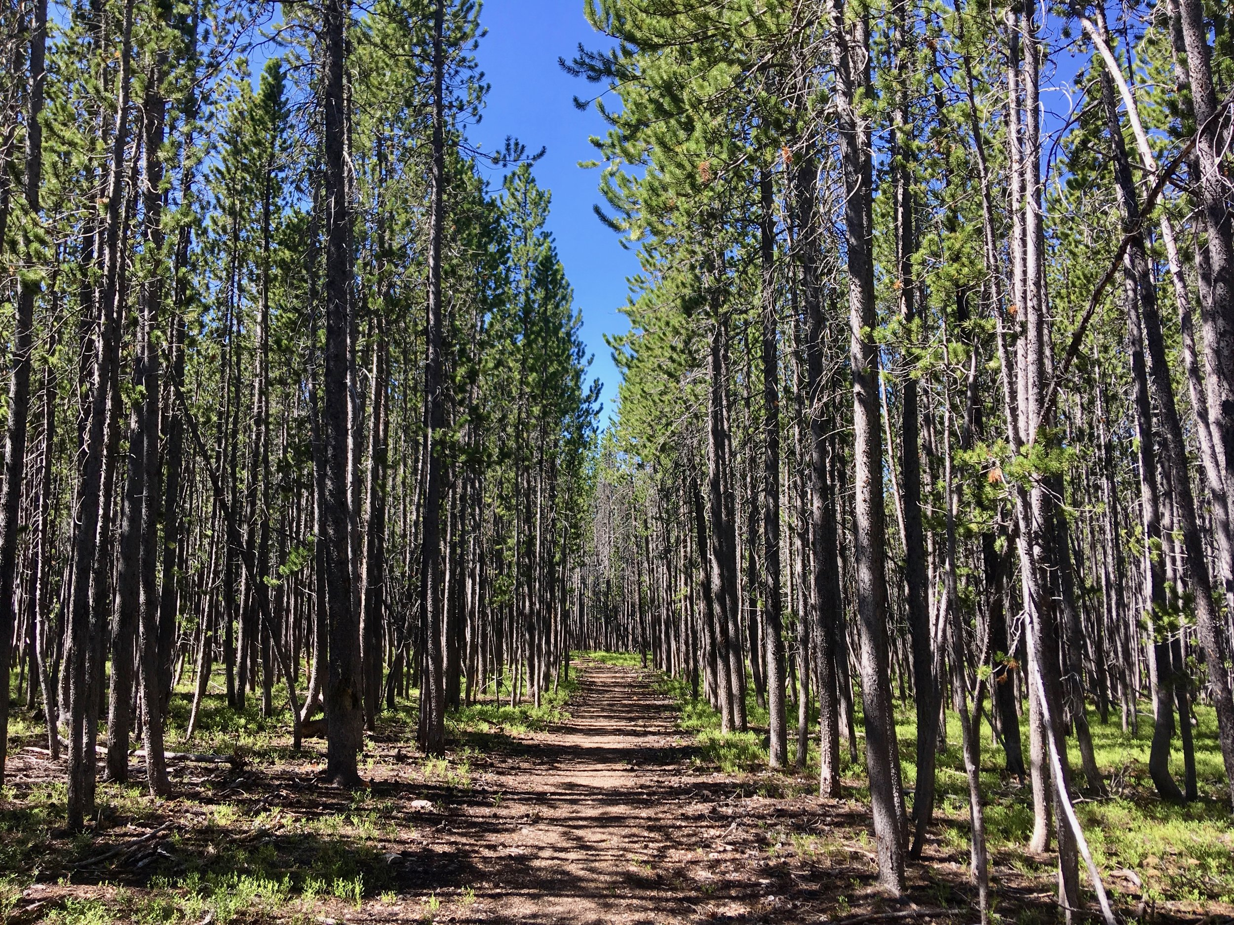 Helena National Forest, MT