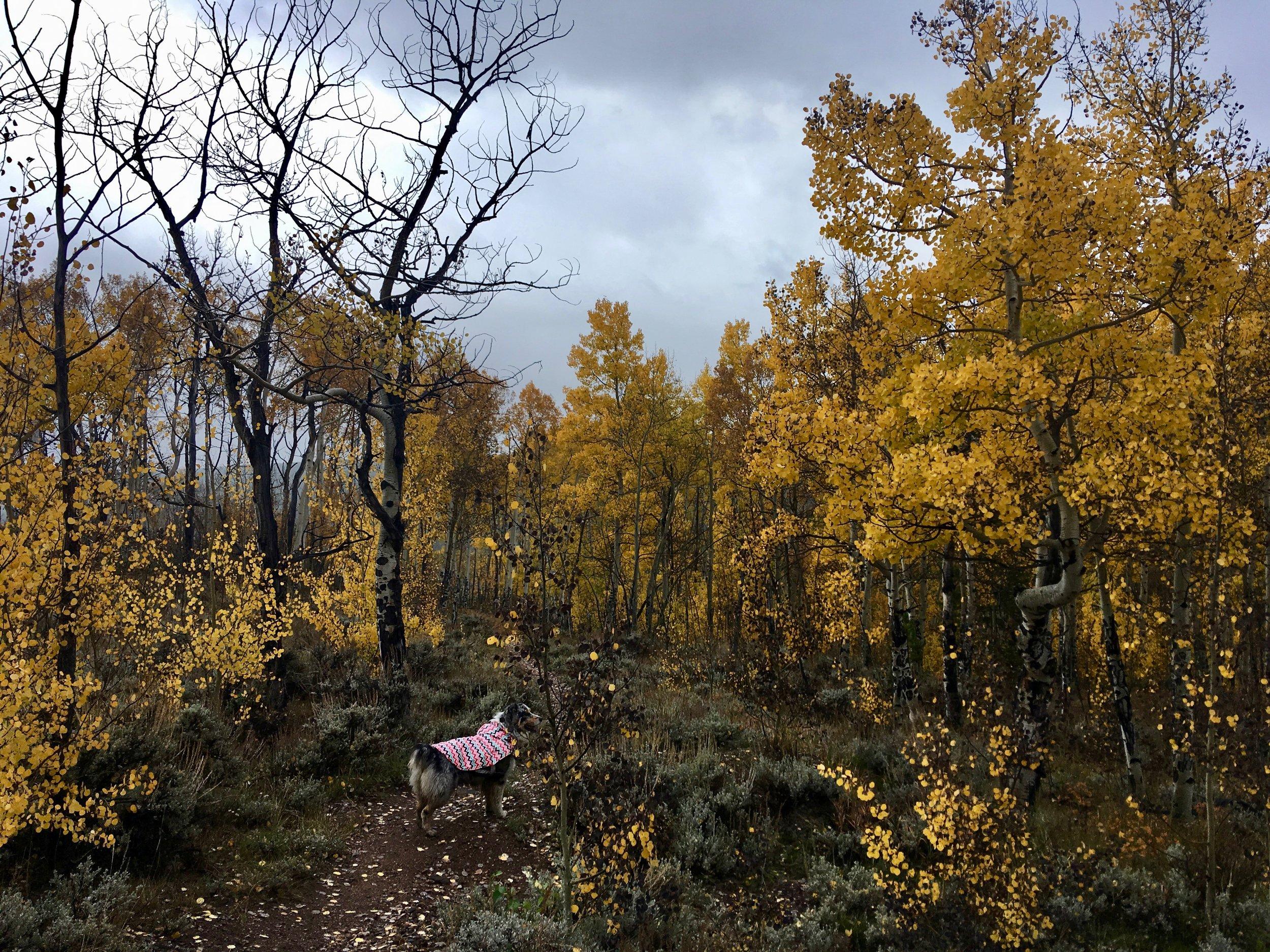San Isabel National Forest, CO