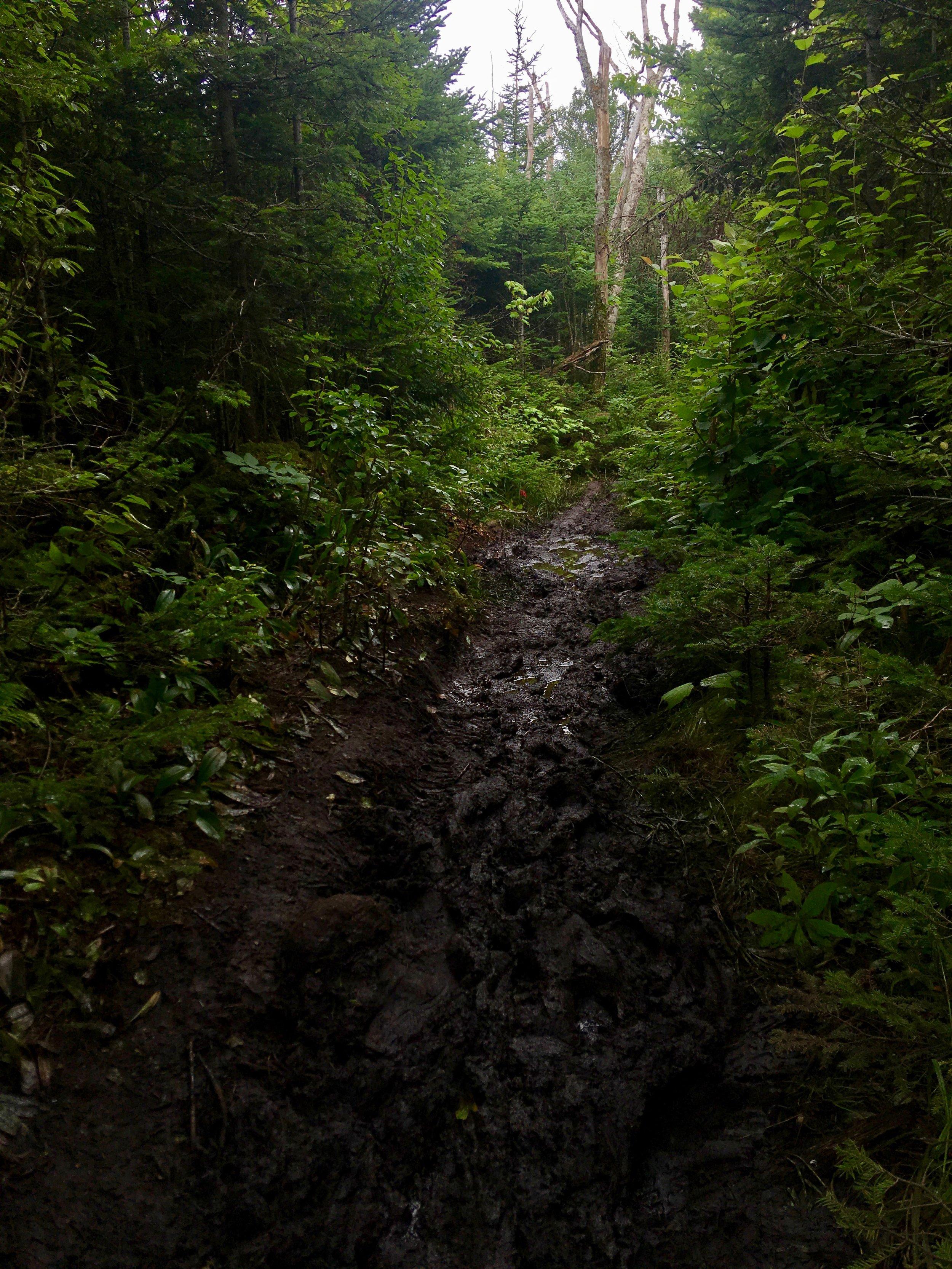 Appalachian Trail, So. NH