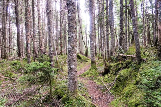 Cohos Trail.jpg