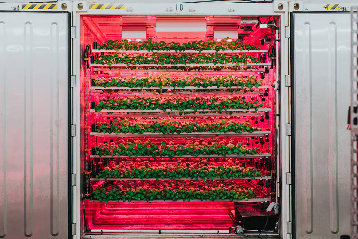 The CubicFarm System moves rows of leafy greens through a system calibrated to grow the perfect crop. ( cubicfarms.com )