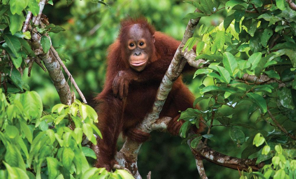 Palm Oil Certification Program