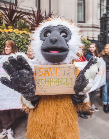 Image 5: One of Ape Alliance Gibbon mascots used in a number of the school workshops and talks that allowed pupils to write letters and draw posters to the Bank of China to stop the development of the Batang Toru dam. [Photo: Tory Tsui, Instagram: @torytsui]