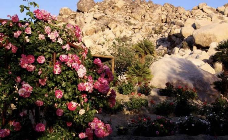 sacred rose cave.jpeg