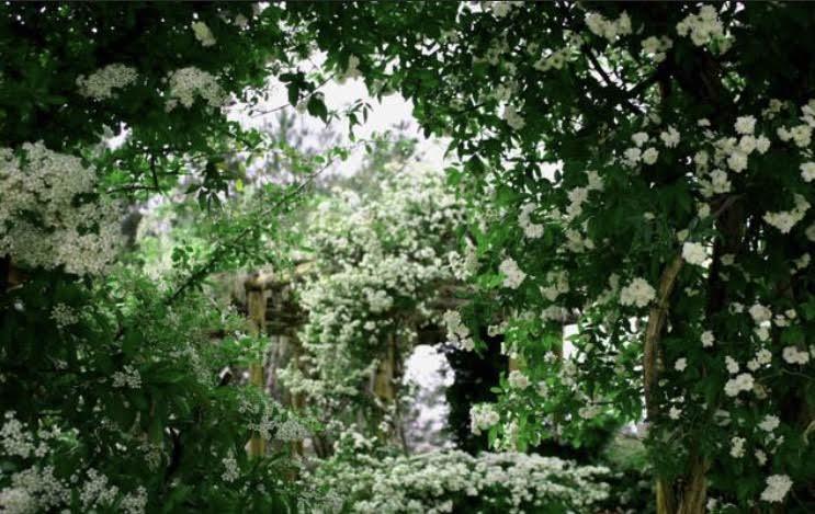 rose sanctuary.jpeg