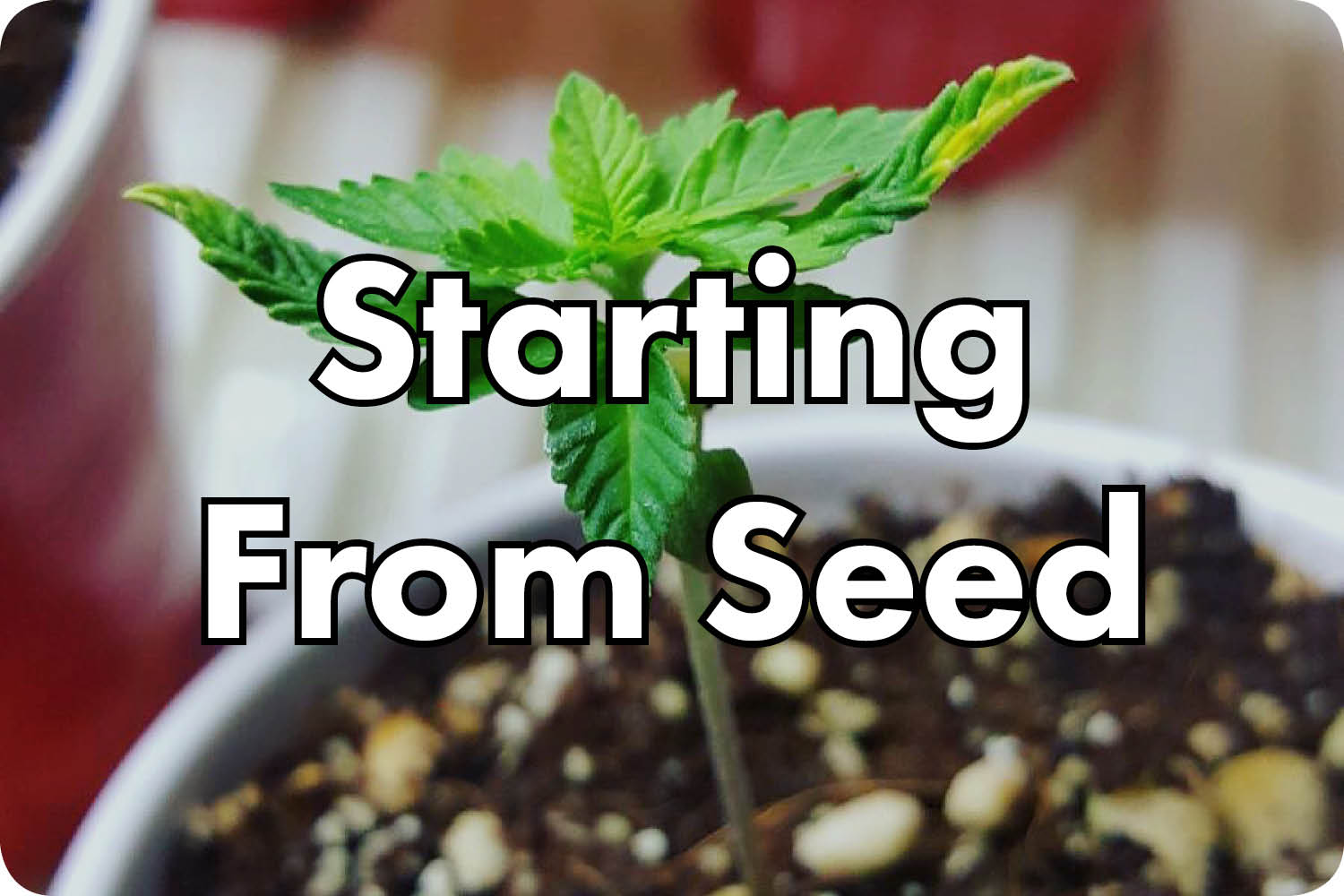 starting from seed.jpg