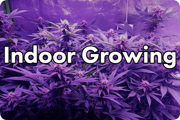 indoorgrowing.jpg