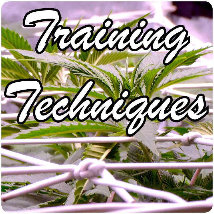 trainingt.jpg
