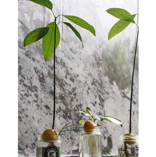 So impressed by  Lucie Naujalis ' Avocado Garden.