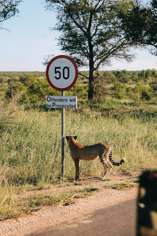 South Africa-442.jpg