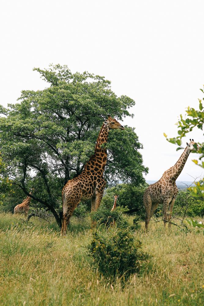 South Africa-375.jpg