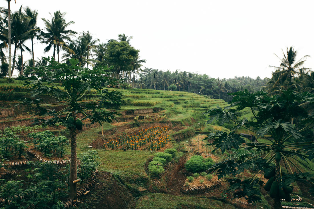 Bali (29 of 136).jpg