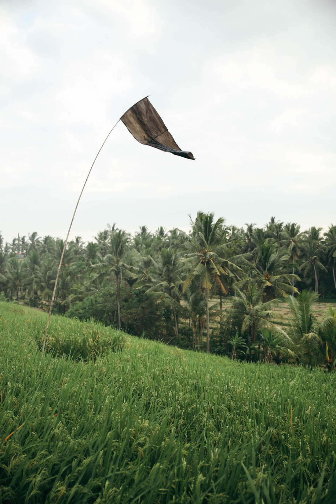 Bali (46 of 136).jpg