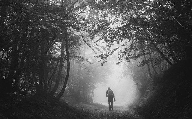 Bosque de Peloño (Ponga, Asturias)