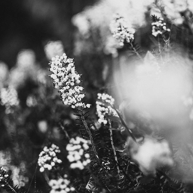 No sé qué tienen las flores, Llorona. Las flores de un campo santo. Que cuando las mueve el viento, Llorona. Parece que están llorando.
