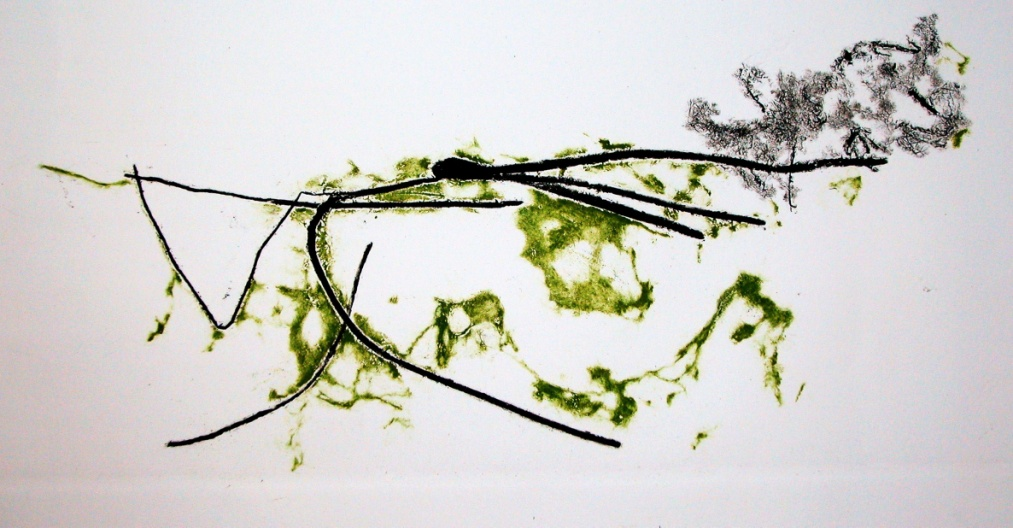 Alghe di Grado, 2011