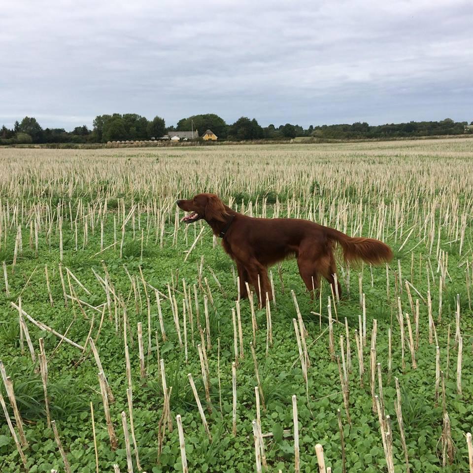 Evian - Ny Vinderklassehund med sin 1. Pr.