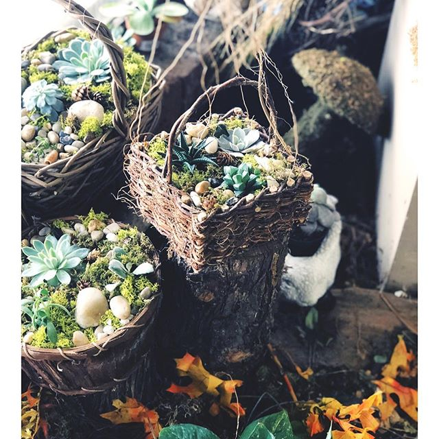 unique succulent baskets ✨ these cuties make the perfect gifts for any occasion!  stop in and get yours!  we're open 9 am- 5:30 pm M-Fri & 9 am-4 pm Saturday 🌿🌱✨ • • • • • • • • • • • • • • • • • • • • • • • • • #shoplocal #alwaysalwaysflowers #athens #uga #my_athens #florist #floristsofinstagram #flowers #succulents #succulovers #succulentsofinstagram #art #livingart #plantsofinstagram #plantsmakepeoplehappy #plantlove #georgia #greenthumb