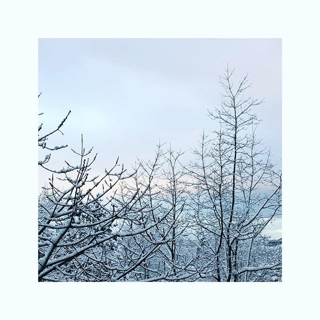 """Channeling a quiet and peaceful day. """"stay soft. It looks beautiful on you"""" ~ @nayyirah.waheed . . . . . #natureismedicine #snowday #soften #meditate #peace #love #integrativemedicine"""