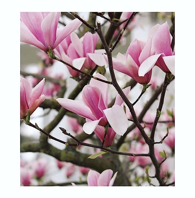It's that time. Crack out of that shell. Birth it. Be it. Blossom. May is here ! 💗🌸⚡️