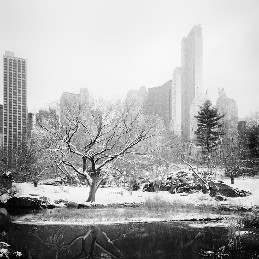 Snow covered Central Park Study #7, New York City, USA 2016 - No