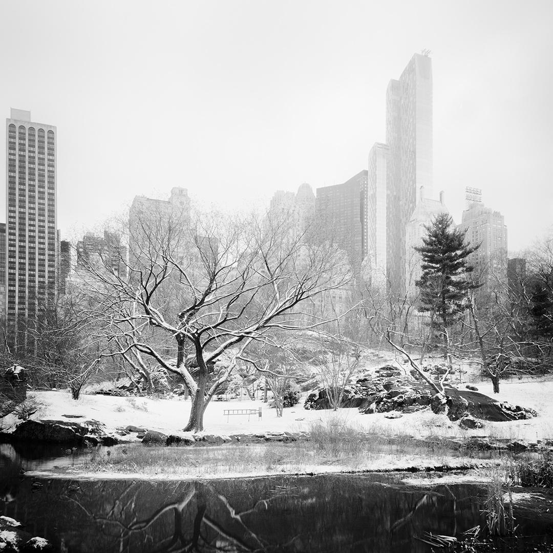 Snow covered Central Park Study #7, New York City, USA 2016 - No